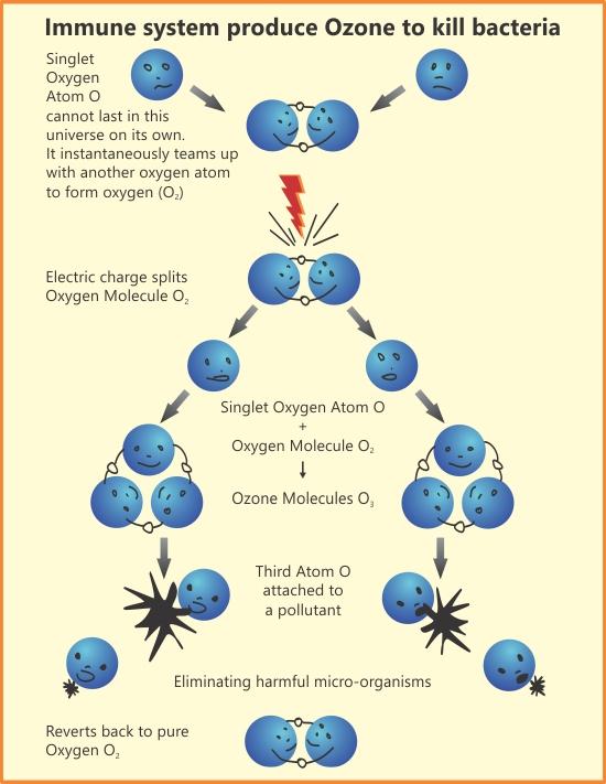 ozone activity